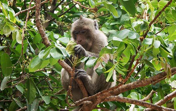 Wildlife at Kulen-Protep Sanctuary Cambodia