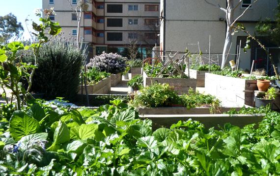 Holmes St Vegetable Gardens