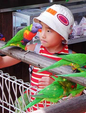Visitors at Lory Loft Bird Park Singapore
