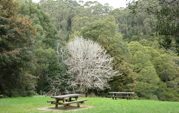 Melba Gully Park