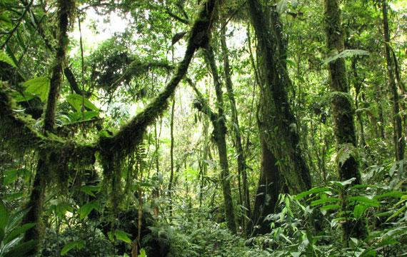 Sumatran Tiger Adventure Vegetation Theme