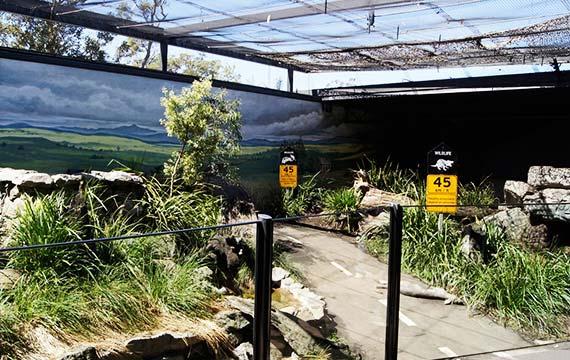 Tasmanian Devil Conservation Centre, Taronga Zoo