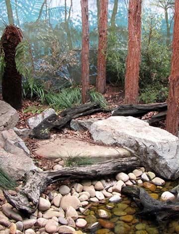 Tasmanian Devil Exhibit, Taronga Zoo
